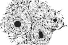 Fungsi Jaringan Ikat pada Hewan