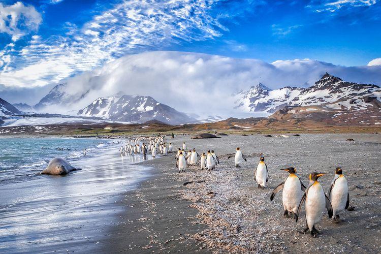 Ilustrasi Georgia Selatan, kawasan margasatwa bagi penguin dan anjing laut. Bongkahan es raksasa dari Antartika diperkirakan akan mendarat di kawasan ini dan mengancam satwa liar.