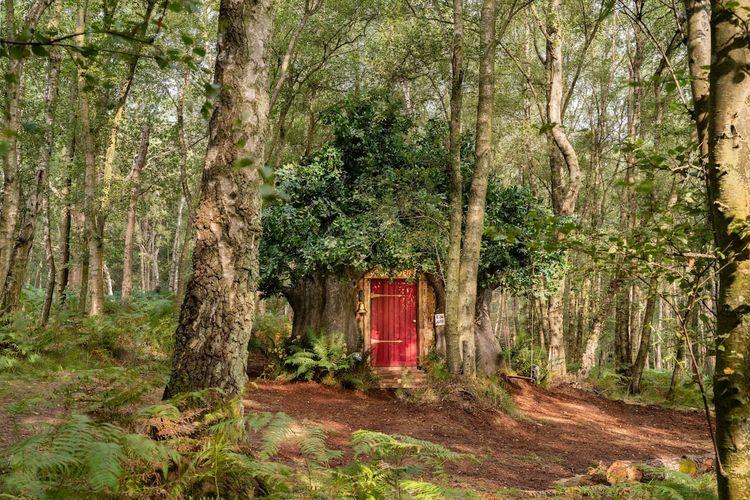 Penginapan mirip rumah Winnie the Pooh bernama Bearbnb di Inggris.