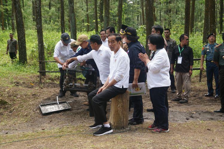 Presiden Joko Widodo melepas burung Elang Jawa di Taman Nasional Gunung Merapi (TNGM) Jurang Jero, Kecamatan Srumbung, Kabupaten Magelang, Jawa Tengah, Jumat (14/2/2020).