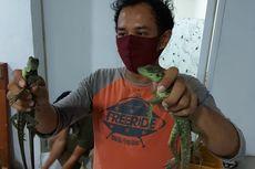 Kerugian Ekologis Akibat Perdagangan Ilegal 153 Reptil di Bandara Soetta Sangat Besar