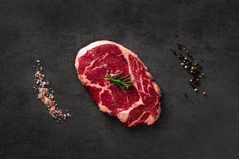 Galesia Beef Sudah Ada di Indonesia, Daging Berkualitas Hasil Silang Sapi Indonesia dan Spanyol
