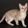 5 Cedera yang Bisa Terjadi pada Ekor Kucing