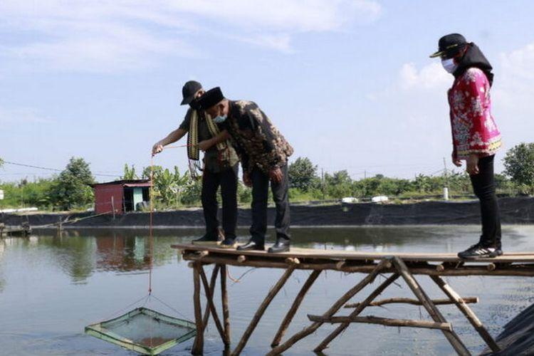 Bupati Tulang Bawang Winarti menyasikkan aktivitas menambak udang di Tambak Dipasena, Kabupaten Tulang Bawang, Lampung, Sabtu (27/2/2021)