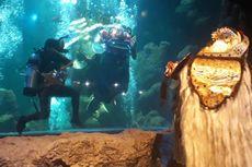 Video Melihat Pertunjukan Barongan Bawah Air di Sea World Ancol