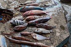 Air Laut di Perairan Halmahera dan Ternate Berubah Kecoklatan, Sejumlah Ikan Mati