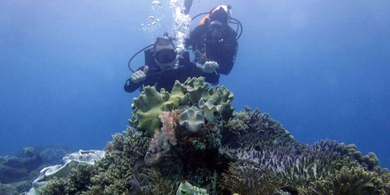 Keindahan bawah laut Teluk Sumbang di Kabupaten Berau, Kalimantan Timur.