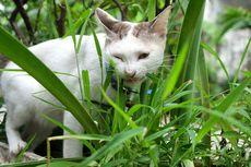 Hati-hati, 8 Tanaman Ini Beracun untuk Kucing