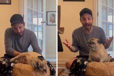 Anjing New York Ini Bisa Prediksi Baik-Buruk Hari, Videonya Viral