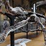 Inilah Sarcosuchus, Salah Satu Buaya Terbesar di Bumi