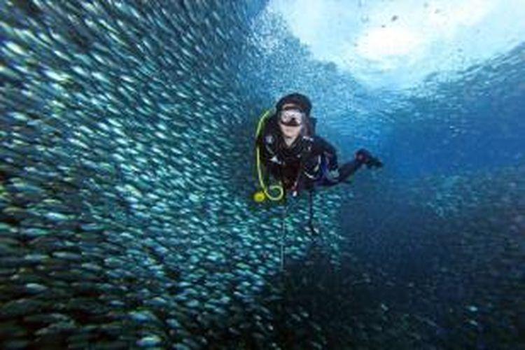 Suasana menyelam di perairan bawah Dermaga Arborek, Raja Ampat.
