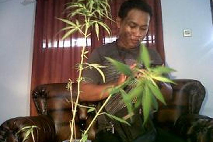 Barang bukti sejumlah pohon ganja yang diamankan di dalam Lemabaga Pemasyarakatan (Lapas) Kelas II A Watampone, Kabupaten Bone, Sulawesi Selatan. Rabu, (06/11/2013).