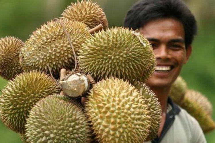 Ilustrasi: durian.