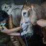 Sejumlah Imbauan PBNU Imbau Terkait Penyembelihan Hewan Kurban