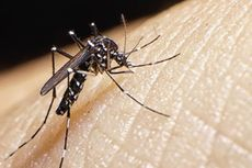 Setelah Zika, WHO Waspadai Wabah Demam Kuning