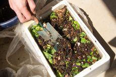 Bahan Makanan Terbaik dan Terburuk untuk Dijadikan Kompos