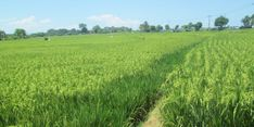 Mentan Dukung Upaya Kabupaten Madiun Lindungi Lahan Pertanian