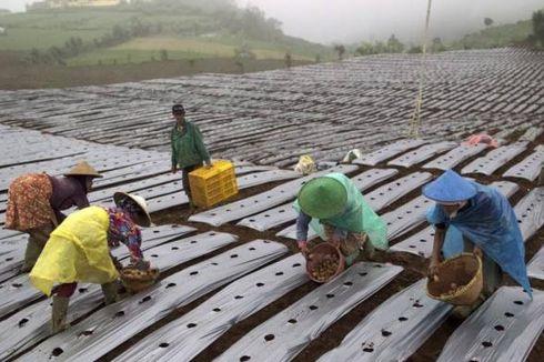 Petani Muda Indonesia Hanya 1 Persen, Pakar IPB: Peluang Usaha Tani Besar