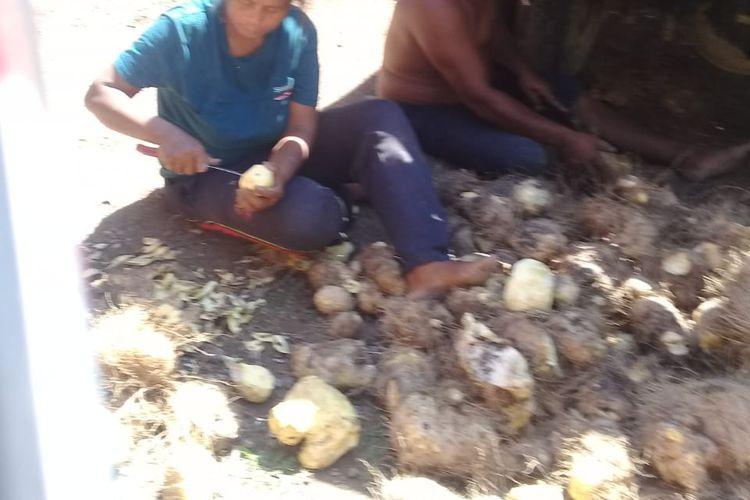 Warga Desa Woedoa mengolah ubi hutan agar bisa dikonsumsi. Warga terpaksa mengonsumsi ubi hutan karena tak memiliki uang untuk membeli beras dan jagung akibat pandemi virus corona baru.