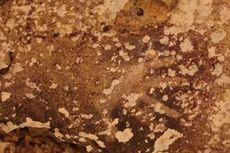 Lukisan Goa di Sulawesi Dinobatkan sebagai Stensil Tangan Tertua di Dunia