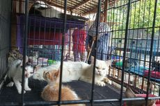 Kisah Dita Rawat 250 Kucing Telantar, Keluarkan Rp 1 Juta Sehari untuk Pakan