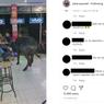 Viral, Video Sapi Masuk ke Toko Handphone di Kudus, Pemiliknya Masih Tanda Tanya
