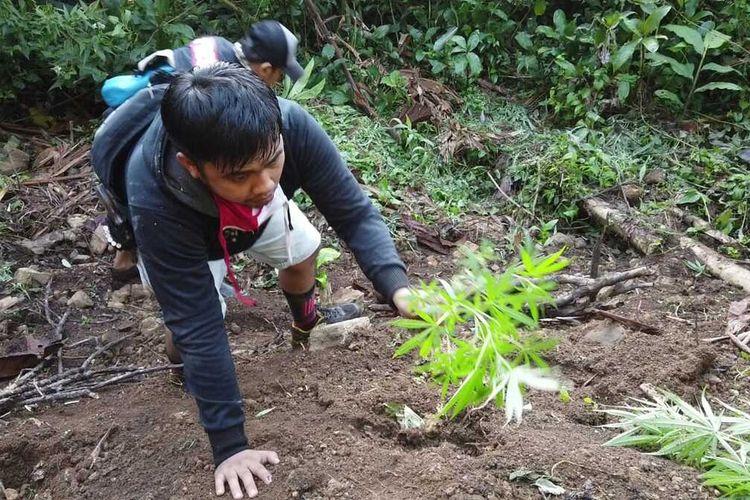 Petugas dari Polres Empat Lawang menemukan ladang ganja yang ditanam disamping kebun kopi di areal perbukitan. Dari hasil penggerbekan tersebut, petugas mengamankan barang bukti sebanyak 31 pohon ganja siap panen, Selasa (16/6/2020).