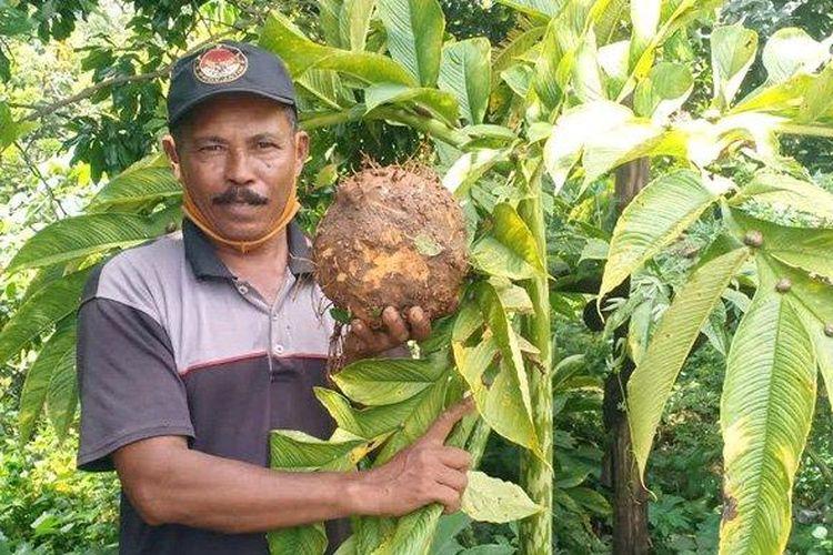 Mujiono (56), petani dari Desa Durenan, Kecamatan Gemarang, Kabupaten Madiun sukses membudidayakan porang.