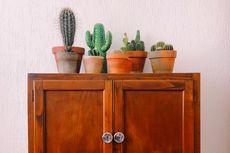 5 Cara Merawat Kaktus agar Tetap Sehat dan Terus Berkembang