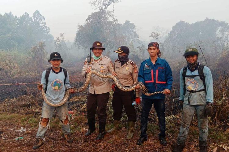 Ular piton yang ditemukan saat pemadaman kebakaran lahan di daerah Sungai Raya Dalam, Kabupaten Kubu Raya, Kalimantan Barat (22/8/2018)