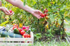 9 Sayuran yang Cocok Ditanam di Halaman Rumah
