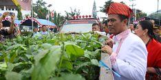 Kopi Toraja Makin Mendunia, Pemerintah Bantu Petani Bibit Unggulnya
