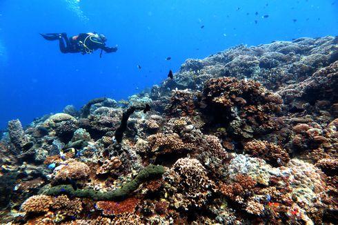 9.560 Wisatawan Berkunjung ke Kepulauan Seribu Sejak PSBB Dilonggarkan