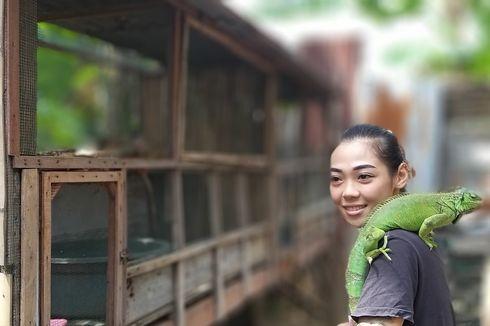 Pasutri Ini Berjualan Iguana, Omzetnya Rp 5 Juta Per Bulan, Pembeli dari Surabaya hingga Jakarta