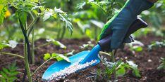 Pengamat Pertanian IPB Puji Manfaat Realisasi Pupuk Bersubsidi di Jabar