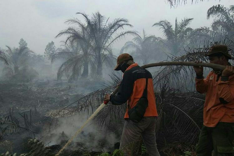 Kemarau Panjang Waspadai Kebakaran Lahan Dan Hutan Halaman