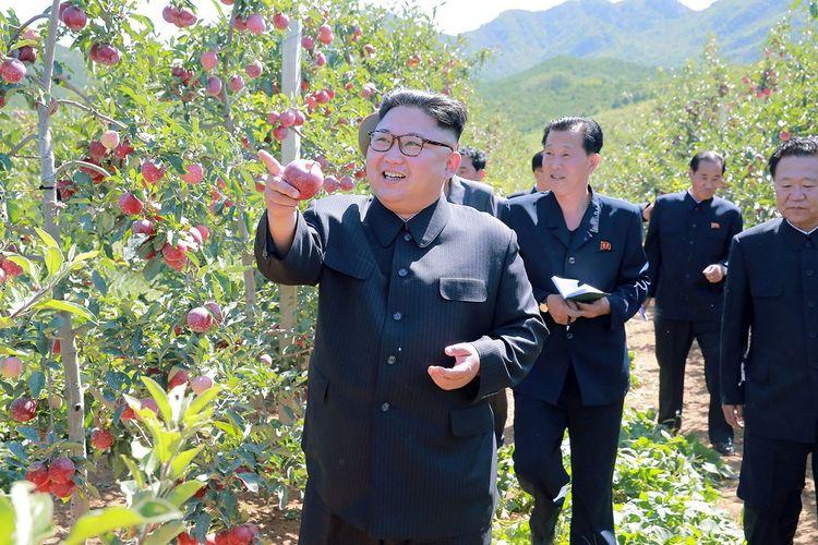 Gambar tak bertanggal yang dirilis oleh kantor berita Korea Utara (KCNA) pada 21 September 2017 menunjukkan Pemimpin Kim Jong Un mengunjungi kebun buah di Provinsi Hwanghae Selatan.