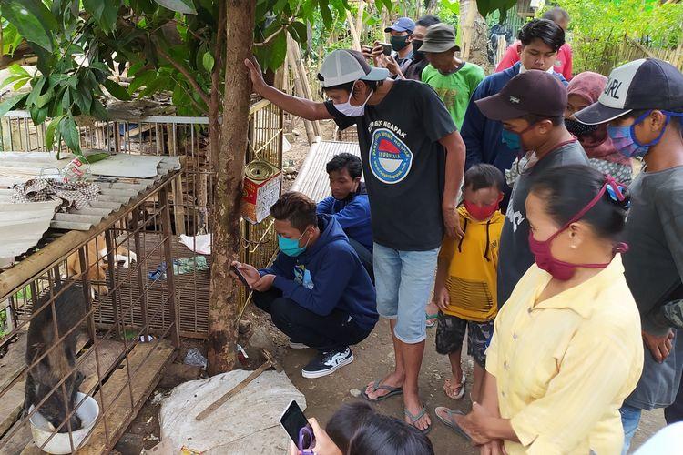Warga berkerumun melihat babi berkaki aneh di Desa Pekuncen, Kecamatan Jatilawang, Kabupaten Banyumas, Jawa Tengah, Senin (15/6/2020).