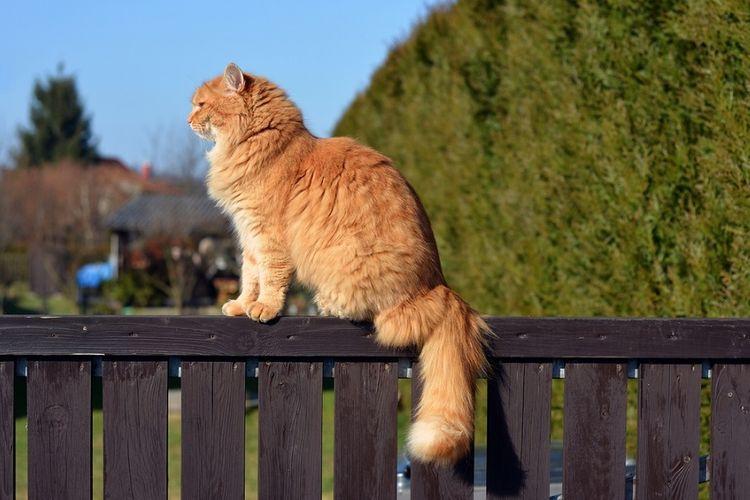 Ilustrasi kucing di atas pagar.