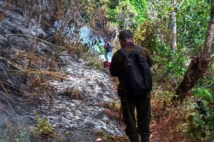 3 Hektar hutan pinus di Lereng Gunung Lawu terbakar diduga akibat dari kelalaian pencari madu hutan yang meninggalkan jerami untuk mengusir lebah yang masih menyala.