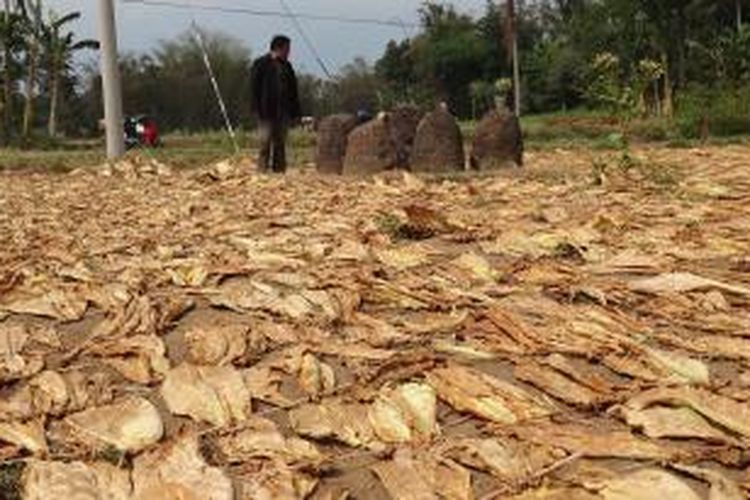 Situs purbakala di Desa Pekauman, Kecamatan Grujugan, Bondowoso Jawa Timur, berada di tengah- tengah lokasi penjemuran tembakau, Minggu (6/10/13)
