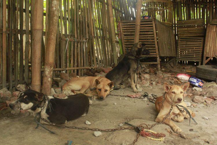 Anjing-anjing di tempat penjagalan yang tidak higienis.