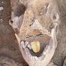 Temuan Langka, Mumi dengan Lidah Emas Ditemukan di Mesir