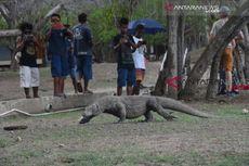 Konsorsium Pembaruan Agraria Tolak Rencana Relokasi Warga Pulau Komodo