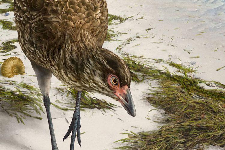 Gambar rekonstruksi burung Asteriornis maastrictensis masa Cretaceous. Merupakan rekonstruksi dari fosil nenek moyang ayam yang disebut Wonder Chicken yang ditemukan di Belgia.