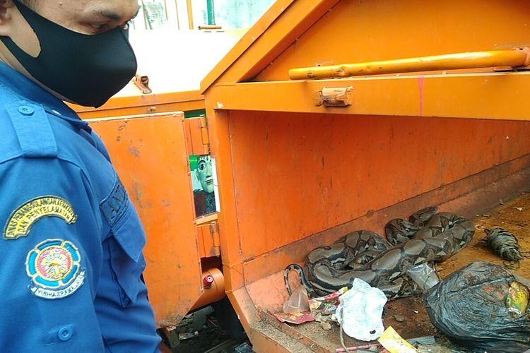 Petugas Damkar Jakarta Barat berusaha mengeluarkan ular sanca dari germor Dinas LH, di Palmerah, Jakbar, Senin (18/5/2020)