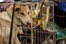 Di Tengah Protes Keras, Festival Makan Anjing di Yulin Tetap Bergulir