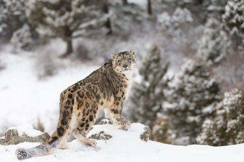 Daftar Spesies Endemik Terancam Punah akibat Perubahan Iklim di Dunia