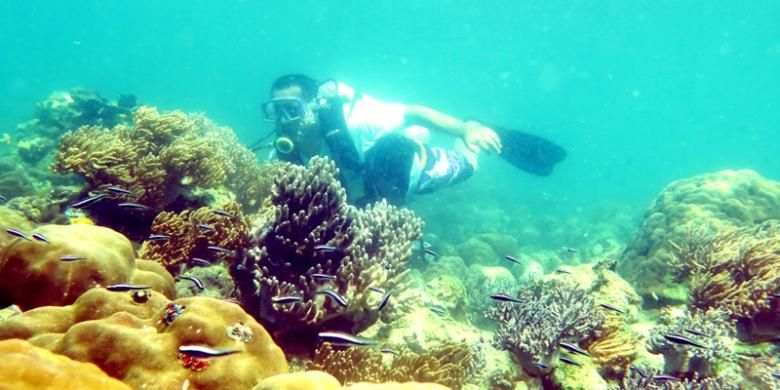 Terumbu karang yang indah menjadi sasaran para pendatang untuk melakukan diving di laut Teluk Pasarwajo, Buton, Sulawesi Tenggara. Terlihat seseorang sedang melakukan diving di laut Teluk Pasarwajo.