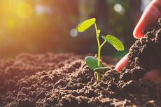 Apa yang Dimaksud dengan Perkembangbiakan Vegetatif Alami?